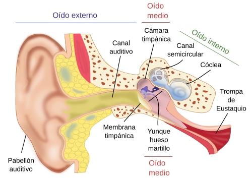 La audición en el niño